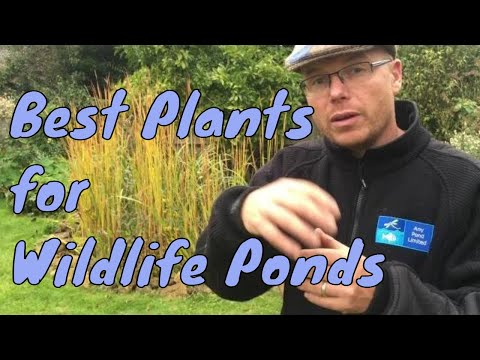 What are the best plants for wildlife ponds | pond plants | UK