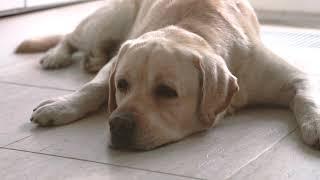 Веракол - лечение острых расстройств желудочно-кишечного тракта