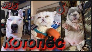 Смешные собаки и котики тик ток 095 Котопёс Приколы 2021 смешные видео лучшие приколы 2021