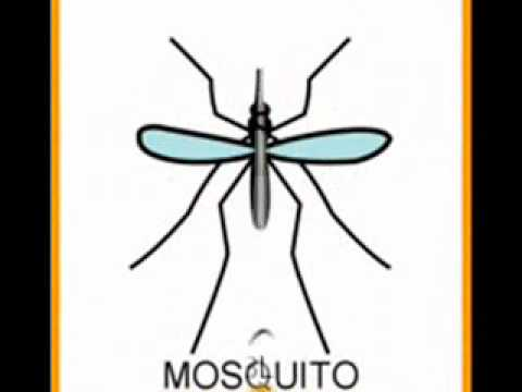 La canci n del mosquito con pictogramas wmv youtube - Como ahuyentar los mosquitos ...