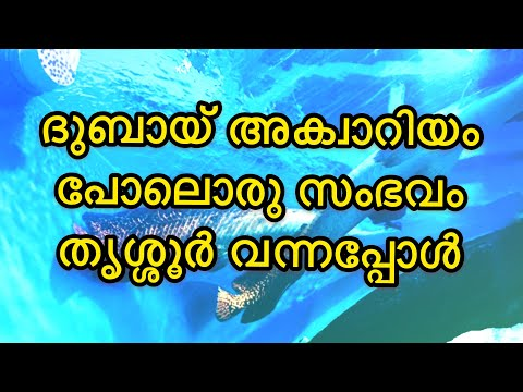 Under water tunnel expo || just like dubai aquarium || trissur exhibition || sakthan ground expo||