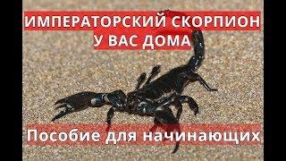 Дарья Подчуфарова   Питомец (ужасы)