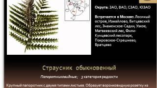 видео Красная книга Москвы