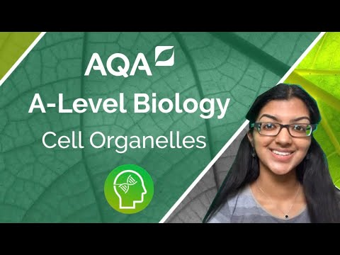 AQA A Level Biology: Cell Organelles