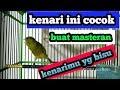 Masteran Kenari Full Tembakan Pancingan Kenari Suara Jernih Kenari Gacor Buat Masteran  Mp3 - Mp4 Download