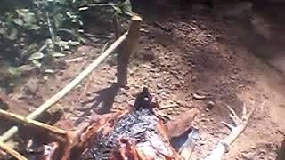 Download Video Time bakar ayam hutan(3) MP3 3GP MP4