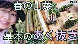 基本的な山菜の茹で方・アク抜き方法です。今回は山から取ってきた各種...