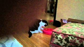 Slow Mo Cat and the Pink Orb Monster form Outer Space