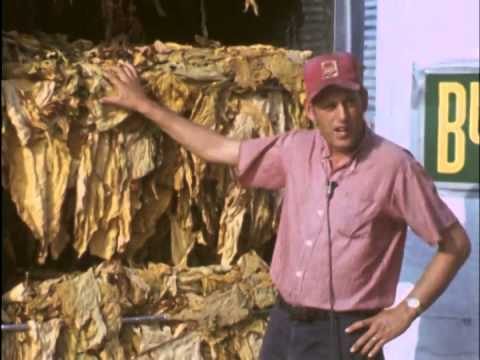 Pistney And Flowers Barn Bulk Tobacco Curing Youtube