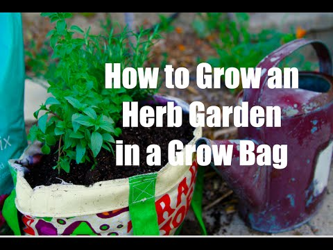 How To Grow An Herb Garden In A Grow Bag Container Youtube