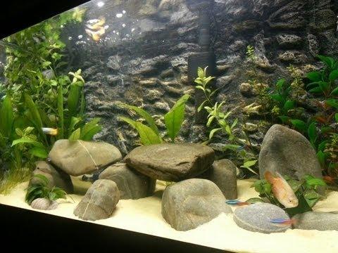 Tropical Fish Tank 60 Litre Aggressive Dwarf Gourami