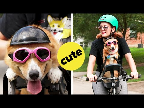 I Tried Riding A Bike With My Corgi