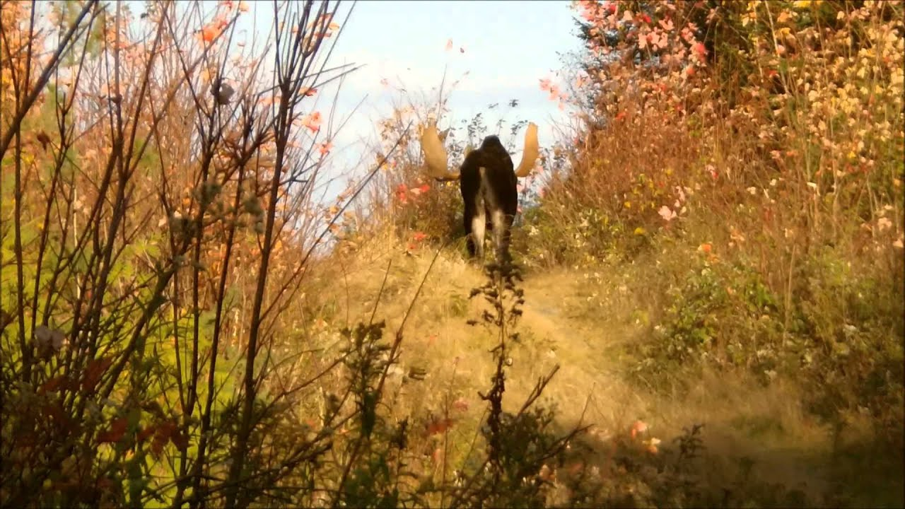Moose video hunt in northern maine by chriscarcam f900lhd for What time is it in maine right now