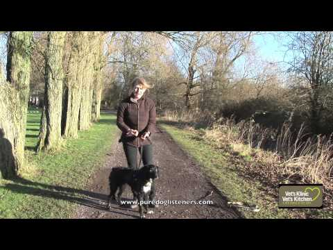 How To Stop My Dog Pulling On The Lead