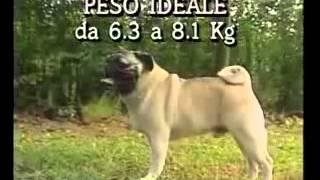 Собаки от А до Я   Французский Бульдог Фильм от ASHPIDYTU в 1996
