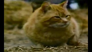 Cat Documentary   National Geographic / PBS   1997