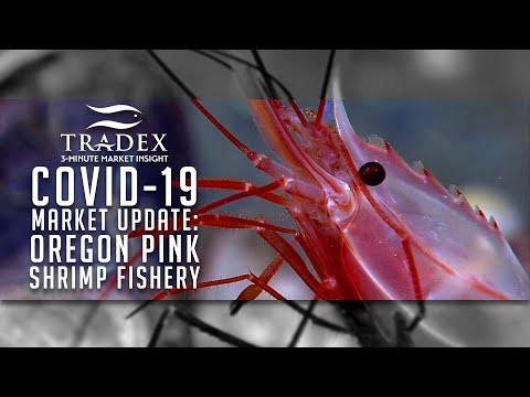 3MMI - COVID-19 Market Update; Oregon Pink Shrimp Fishery