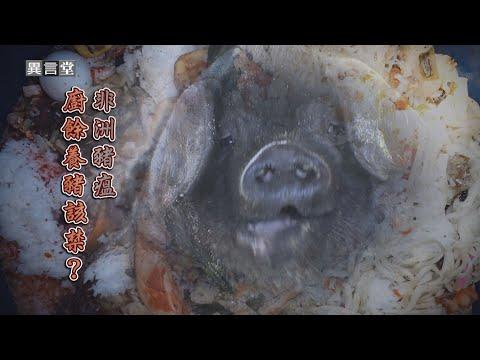 【民視異言堂】非洲豬瘟-廚餘養豬該禁?
