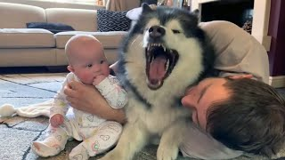Dog or Baby?  Funny Dog Jealousy with Babies asking for more attention