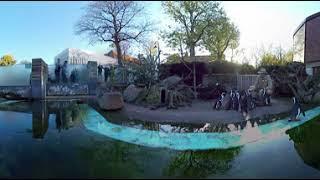 Frischer Fisch für die Pinguine | 360°-Video