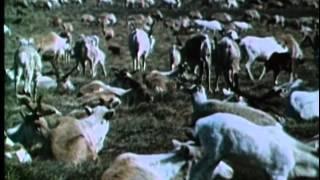 Живая энциклопедия - Лоси, северные олени