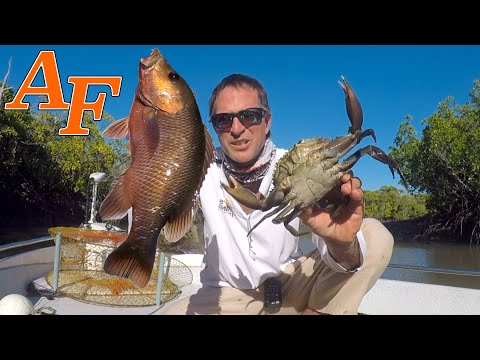 Tackle Club Fishing Challenge With Mangrove Jack Catch And Cook EP.447