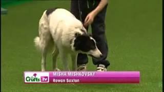 Rowan And Misha, Ykc Agility Dog Of The Year 2011 Crufts