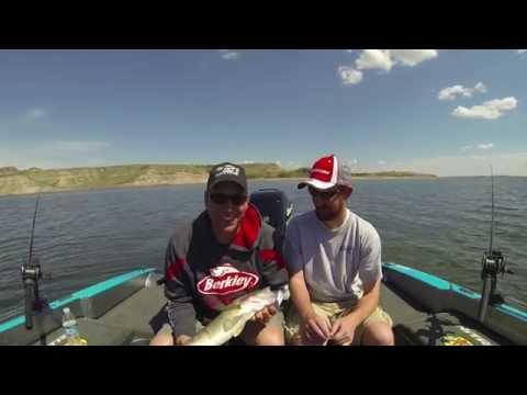 New Town North Dakota Spring Walleyes
