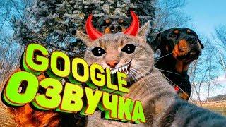Смешная Google Озвучка. Животные. Я Плакал от Смеха. Видео Прикол. Говорящие Коты. Угарная Озвучка