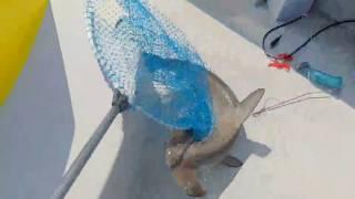 2月24日に 約1ヶ月ぶりに ゆうか丸を出して 根占大浜まで 釣りに行...