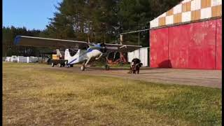 Strongest rottweiler in the world pulling a plane!