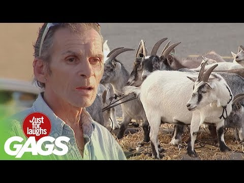 FARM ANIMALS //Best Of Just For Laughs Gags