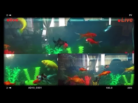 🔴support live fish tank+fish aquarium live fish cam 24/7 relaxing stream + DJ music and party