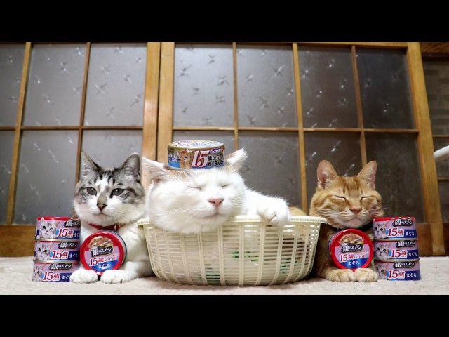 のせ猫 x 誕生日おめでとう 15歳 Happy birthday cat  170308