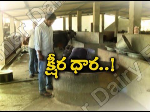 Dairy Farming || Prakasam District || Eruvaka || 99tv
