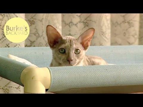Burke's Backyard, Cat Behaviour Part 8 - Alertness