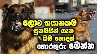 ලොව භයානකම සුනඛයින් ගැන ඔබ නොදත් තොරතුරු මෙන්න | World Most Dangerous Dog Breeds