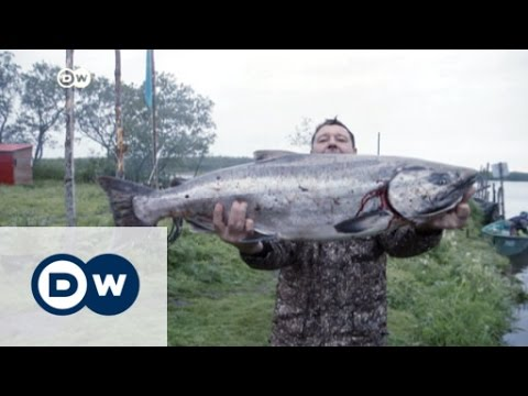 Fishy business: making a living in Kamchatka | DW News