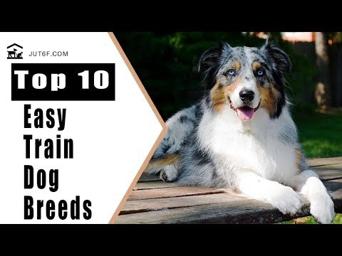 Easiest Dogs To Train - Top 10 Easy To Train Dog Breeds