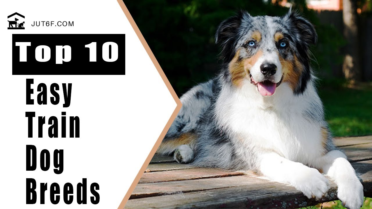 Easiest Dogs To Train - Top 10 Easy To Train Dog Breeds - YouTube | Easiest Dog Breeds To Train