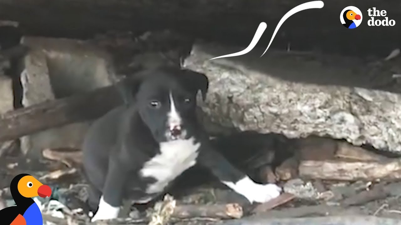 People Keep Trying To Rescue Stray Dog And Her Litter | The Dodo