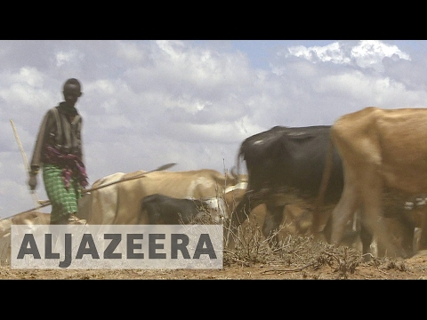 Kenya: Animals killed, ranches razed in herders
