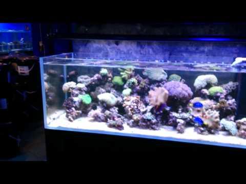 Natural Seawater Verse Synthetic Salt In An Aquarium