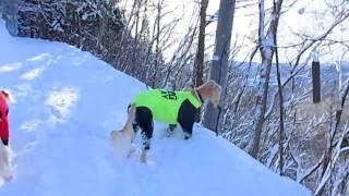 新雪の中を黙々と歩くせら☆れぴ! 天辺までがんばろう.