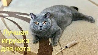 Британский кот высоко прыгает ? / British cat