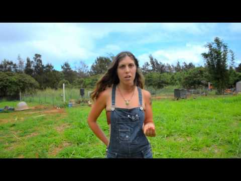 Kauai Permaculture Preview - Happy organic farm animals