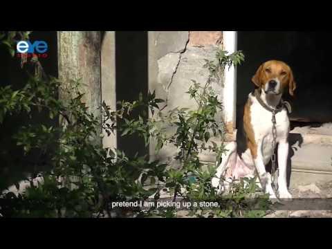 Shall we kill dogs? - film, South Ossetia, 2016, subtitled into  English