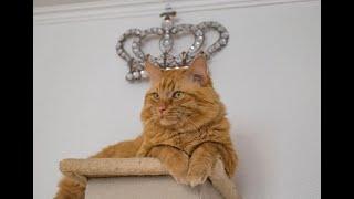 Потрясающе смешные кошки! Подборка приколов с котами и кошками