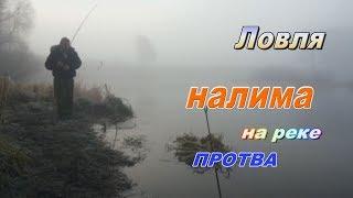 Рыбалка на реке Протва#3.Где и как поймать рыбу.Ловля налима.Как его поймать осенью.Налим в ноябре.
