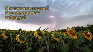 Стоит ли покупать импортные семена подсолнечника?